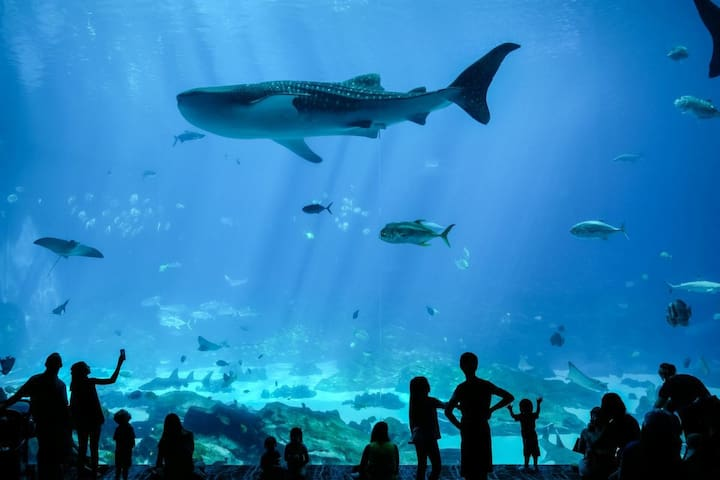 1.4 Miles to Georgia Aquarium