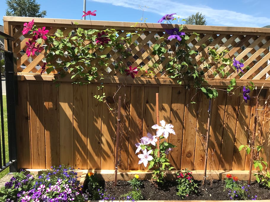 Patio area with blooming clematis