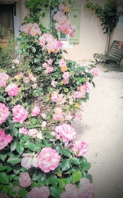 Des roses parfumées à chaque coin du jardin...