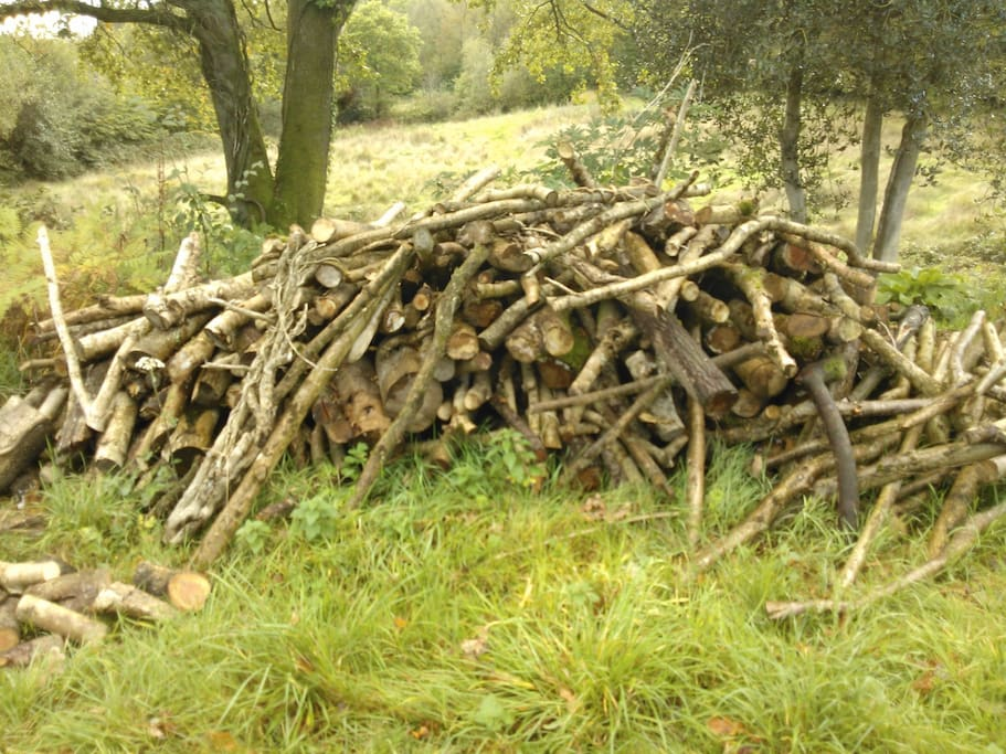 plenty of wood for the stove