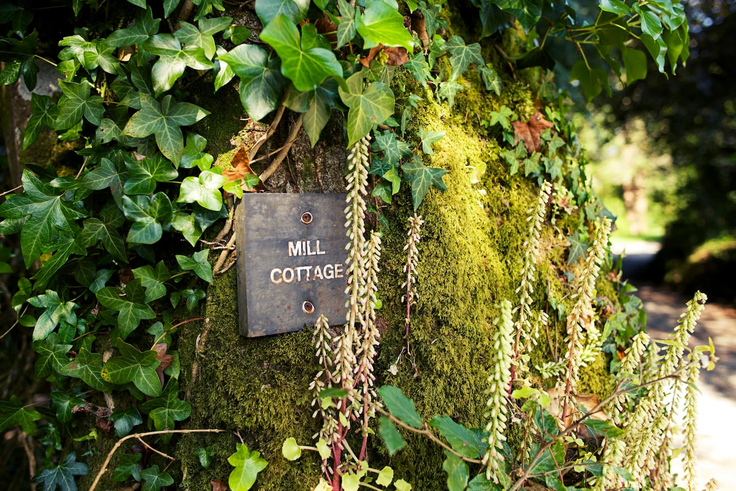 Welcome to Mill Cottage on the 18th Century Colmer Estate, nestled in a peaceful South Hams valley between wonderful Dartmoor and the breathtaking south Devon coastline.