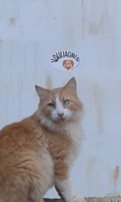 Redy the cAt!  he loves Vouliagmeni!