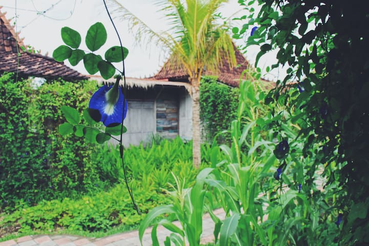 ECO retreat villa Mitir in Rice paddies near Ubud
