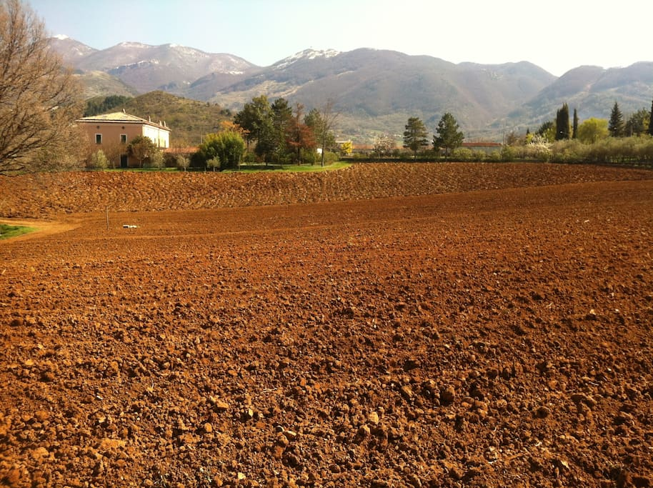 Our land after harvest, with a view on mountains of Pollino National Park