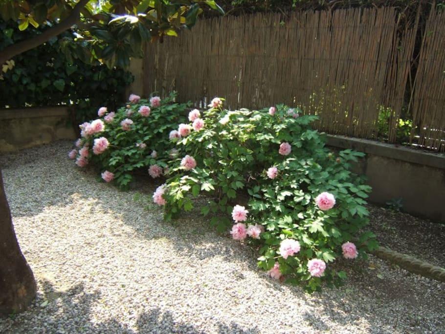 Particolare del giardino privato