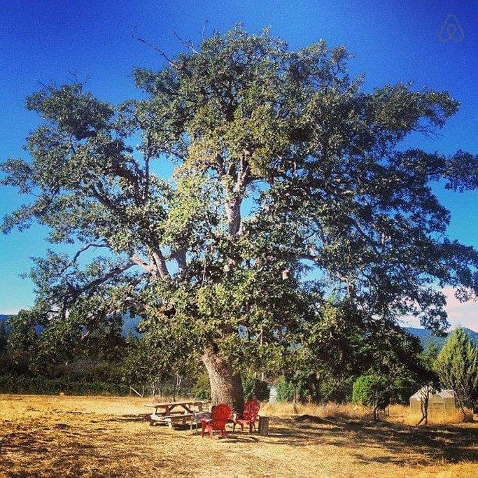 enjoy a glass of wine and great views under the granddaddy oak!