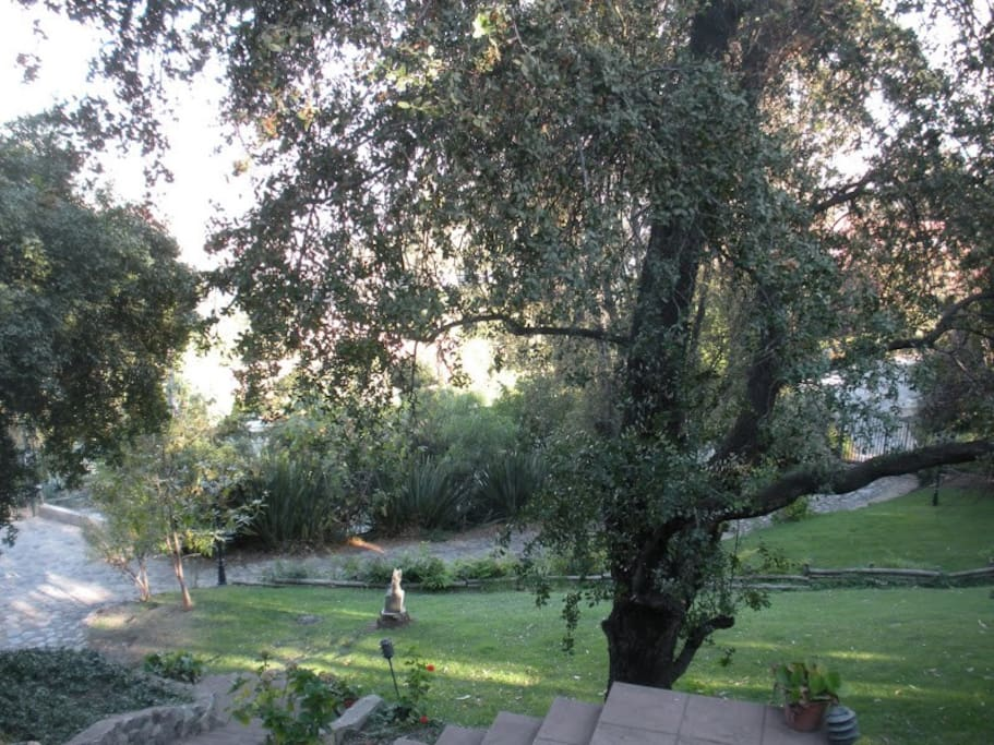 Garden with native Chilean trees (Quillay)