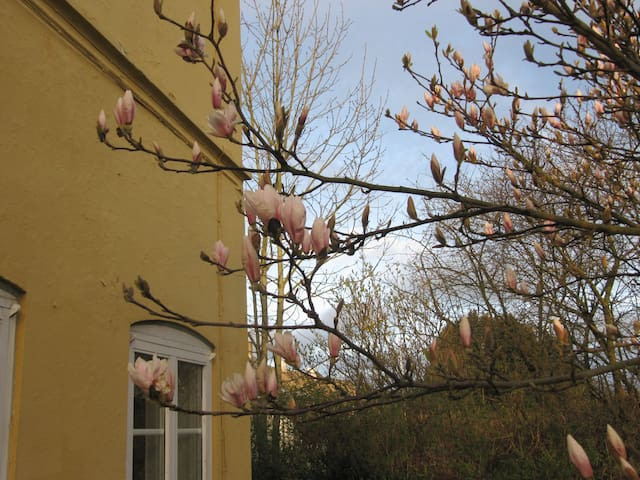 Dejlig lille lejlighed i Sønderborg - Sønderborg - Apartment