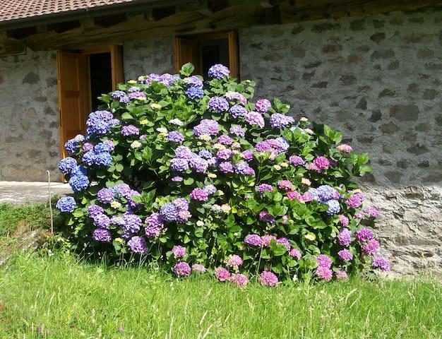 """Green"" house_ Vallecamonica_Italy - Capo di Ponte - Kulübe"