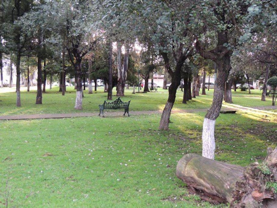 Amplias áreas verdes