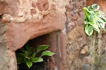 Hosta's in an old oven in the garden