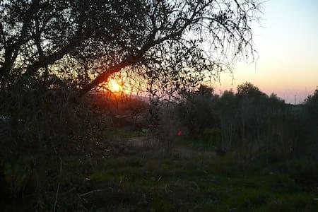 Joy in the Galilee - Kfar Vradim