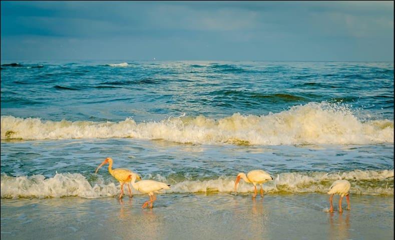 #10 Ocean Breezes in Paradise! Easy beach access.