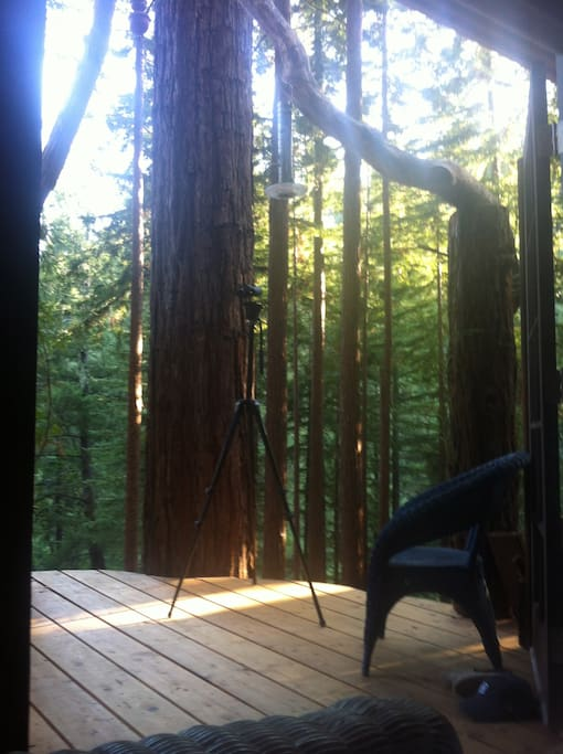 Redwoods To Perch your camera gear, bird watch or write that novel.