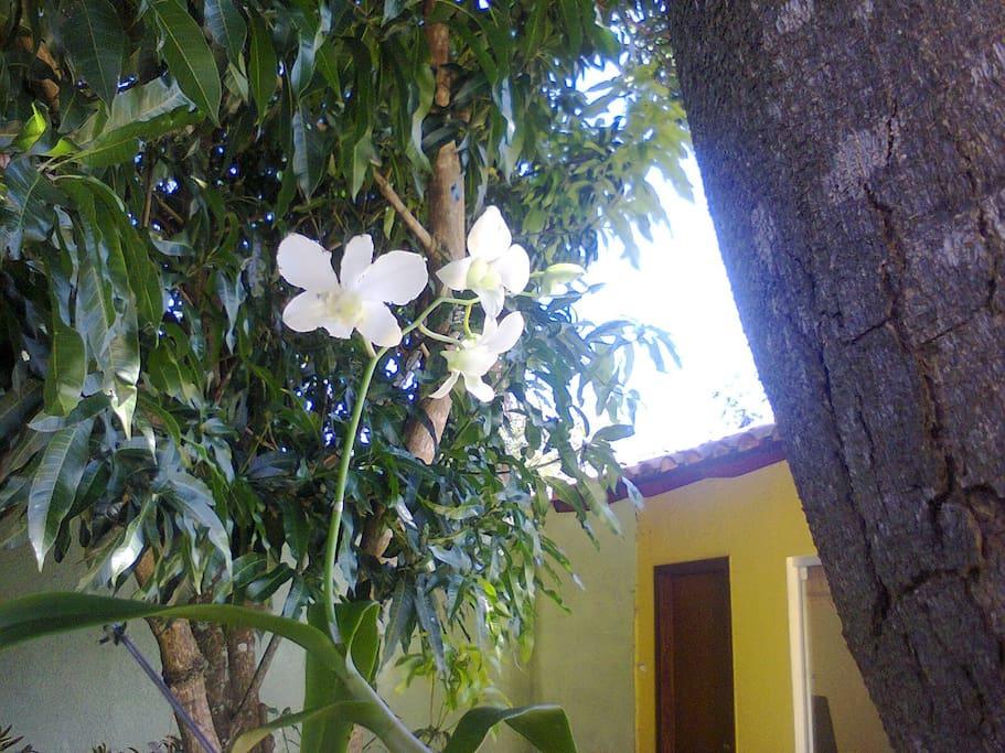 árvores, flores, frutos...
