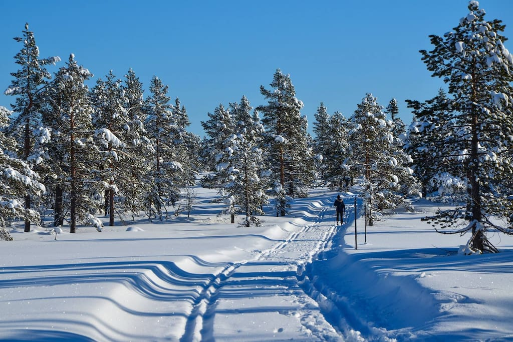 Excellent conditions for cross-country skiing