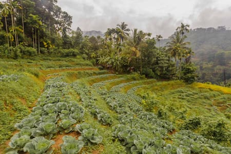 Aberuwan's Homestay - Udispattuwa