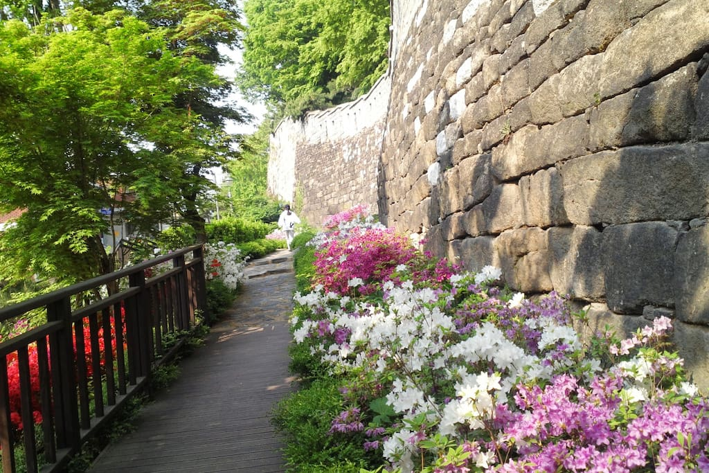 Spring of Seoul City Wall