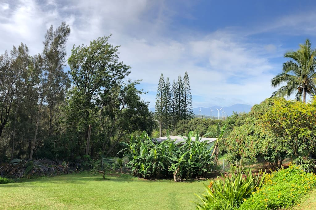 This is the view from the deck.  It's a wonderful place to relax while you enjoy the view of the Waianae mountain range and the sounds of nature.