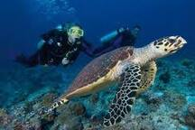 The Diving and Snorkeling is fantastic right in front of Turtle Beach