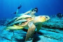 Turtle Beach & Roatan have amazing diving & snorkeling