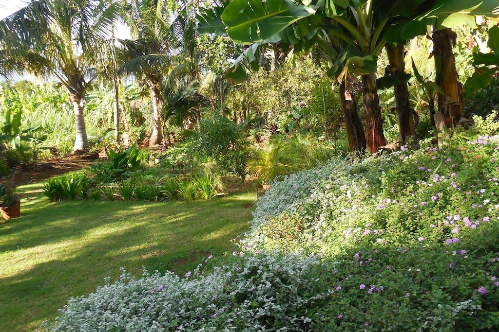Vue de la terrasse - jardin privatif