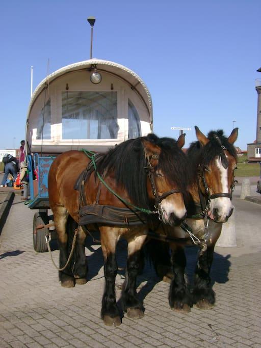 Der Pferdebus bringt die Gäste vom Hafen zum Haus Hammersee