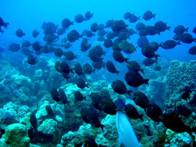 merveilles de la plongee