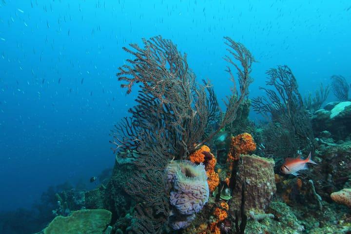 Merveille de la plongée