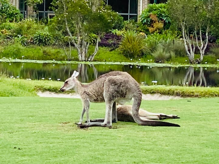 Meet local kangaroos  2 Bedroom Villa-Golf Estate