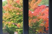 Fall view from your bedroom windows