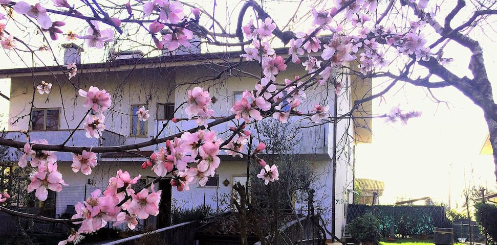 "Rooms 2+3 Palmanova ""Bepi&Bruna House"" (2 rooms)"