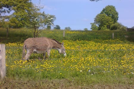home in countryside with donkeys - Saint-Charles-de-Percy - Дом