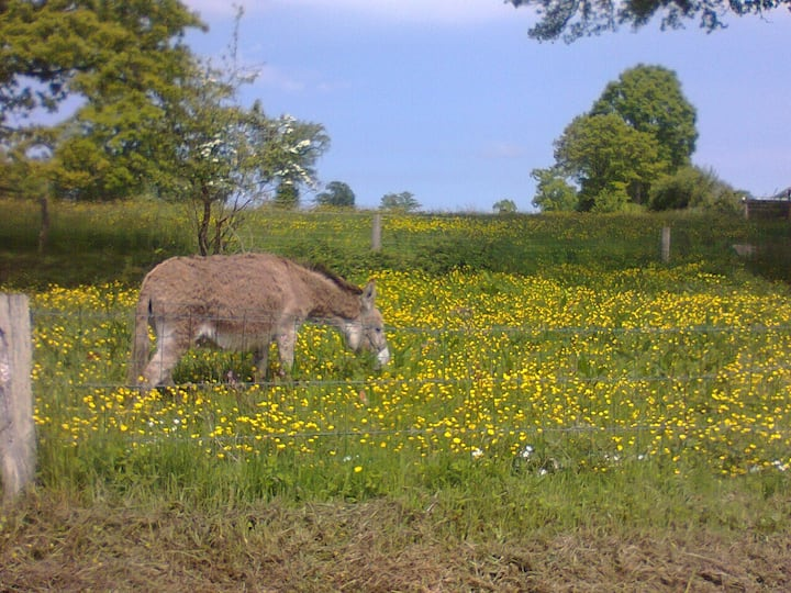 home in countryside with donkeys