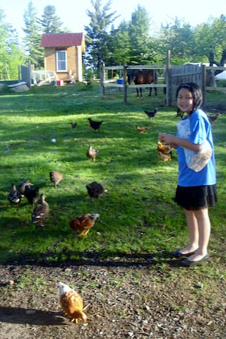 Daughter with our chickens in younger years.