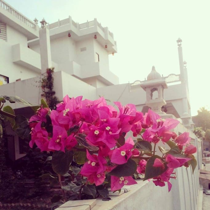 Chandra Niwas Homestay, place full of colors and flowers.