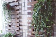 小阳台的绿植