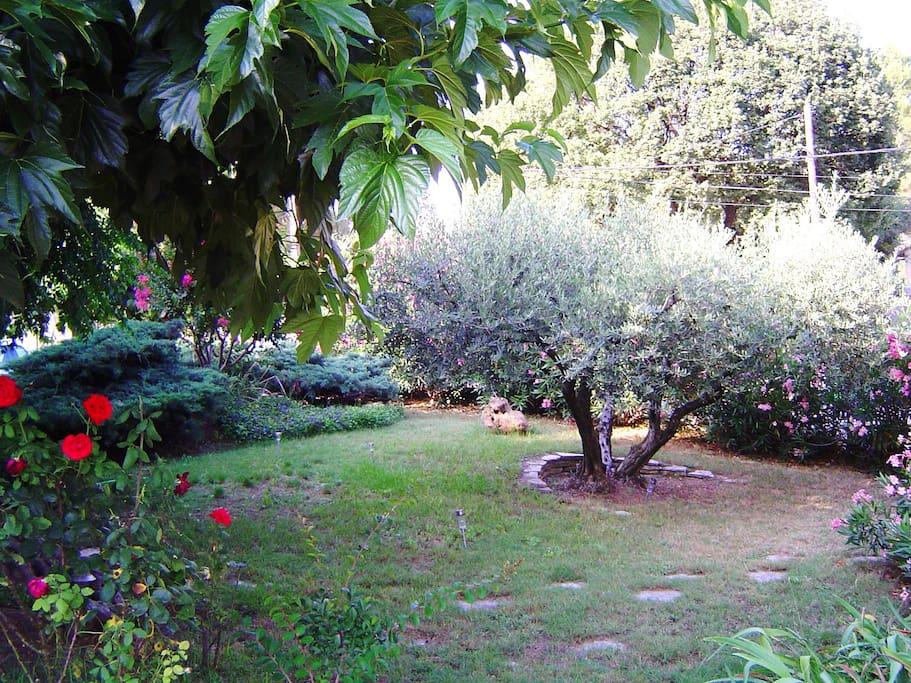 jardin devant la terrasse