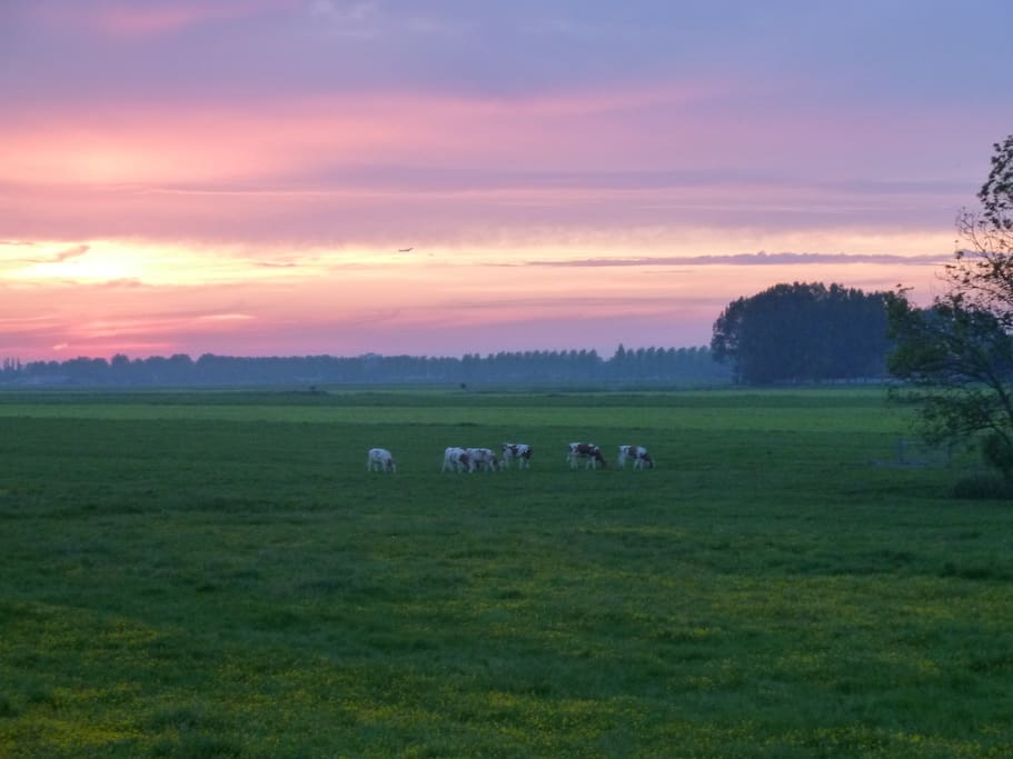 Echt hollands polderlandschap