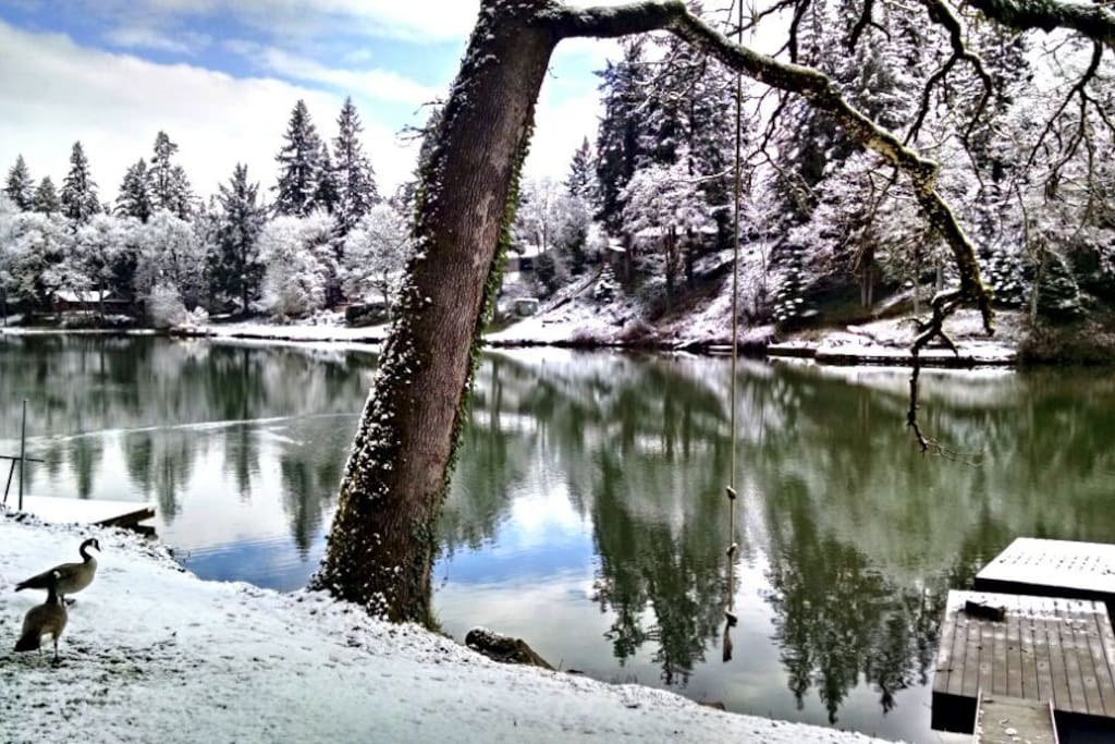 Our backyard, River Forest Lake in February.