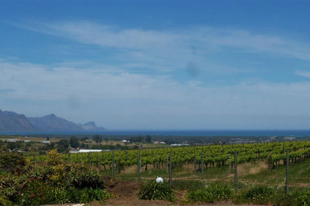 The sea across the vineyards