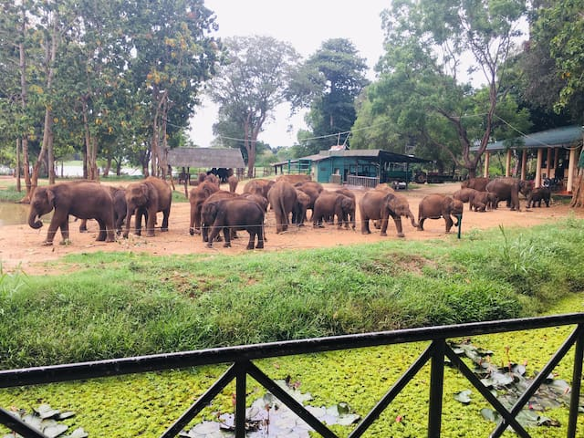 Elephant orphanage is just 5 minutes from here
