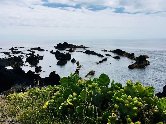 """Sea Roots """"Garden zone 2"""" - Ocean and Mountain"""