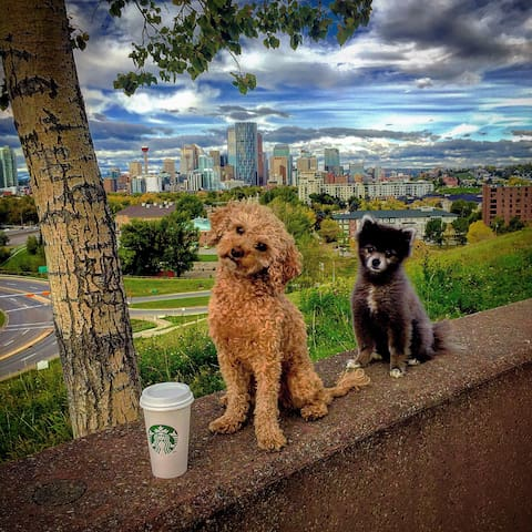 Walking distance to Starbucks and the off-leash park!