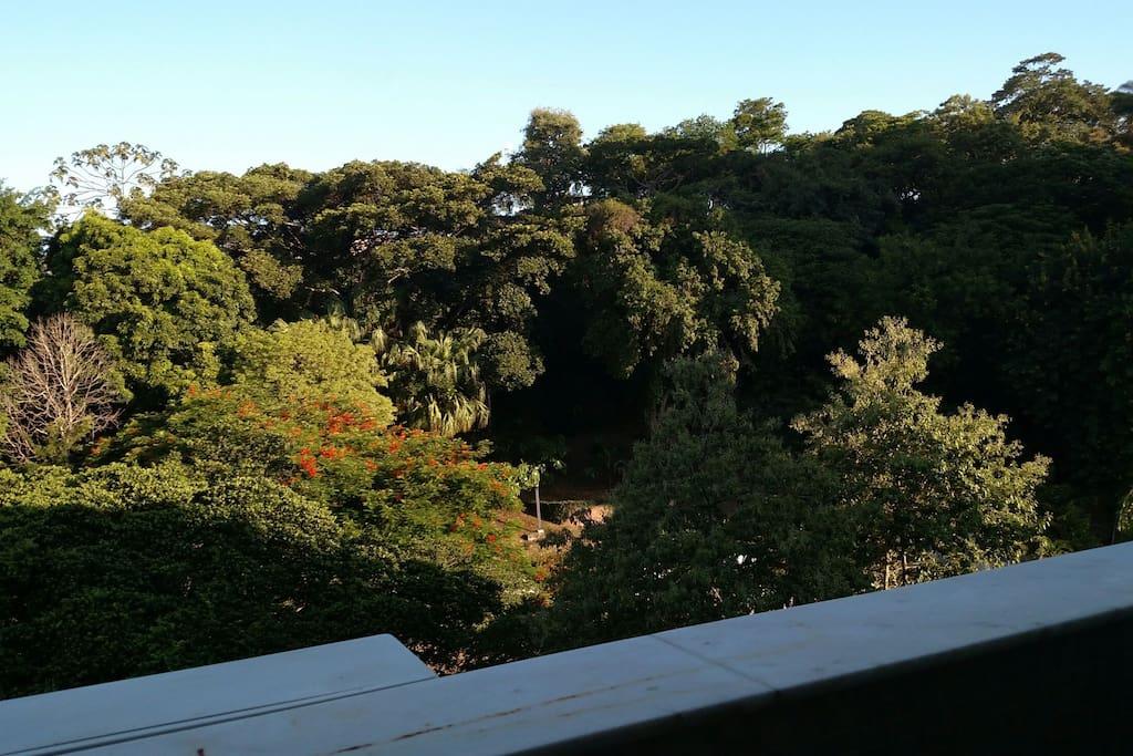 Vista da varanda traseira para a Floresta do prédio