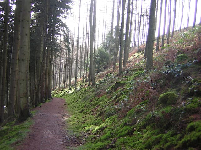Woodland and forest walks