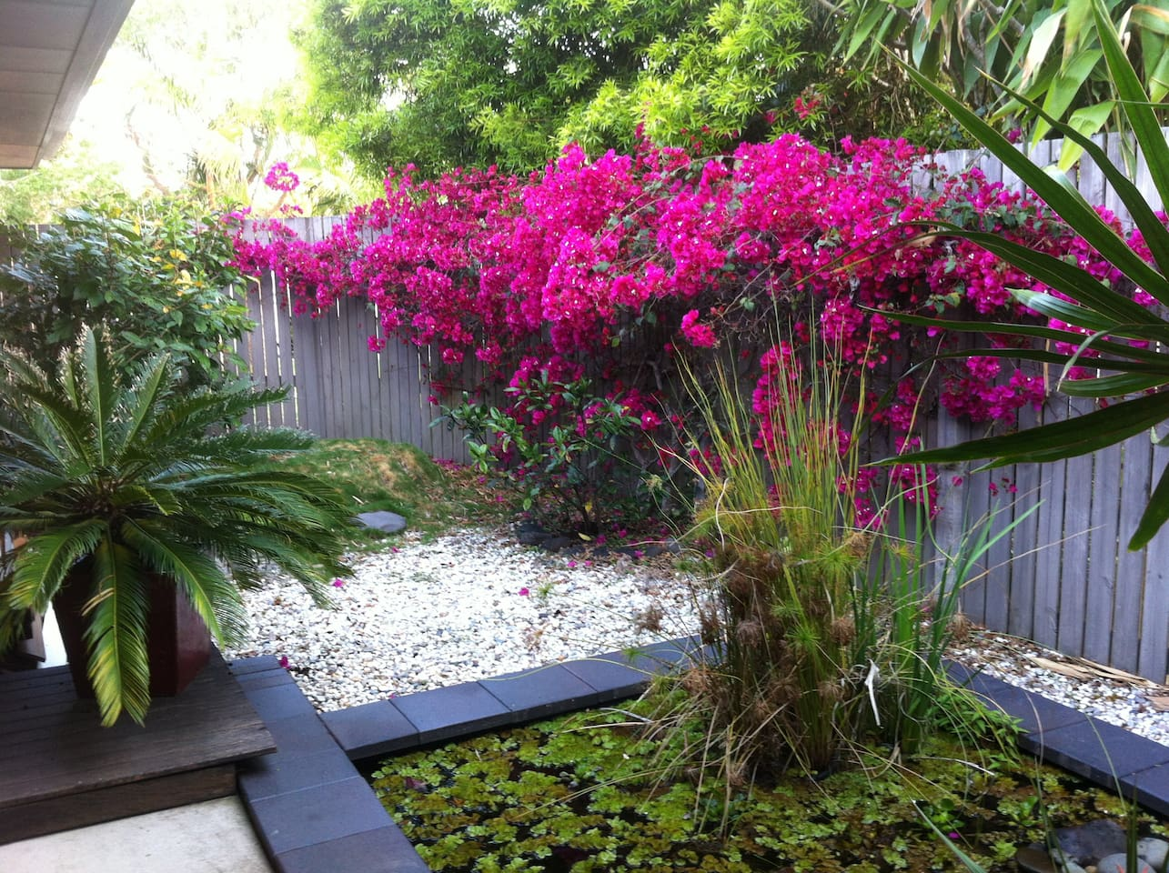 Front courtyard with Bougainvillea.