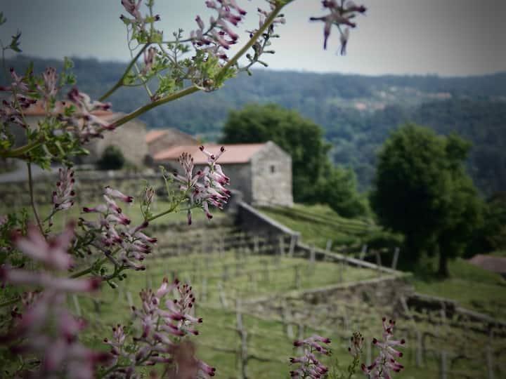 Casita de piedra junto a viñedo ecológico. Galicia