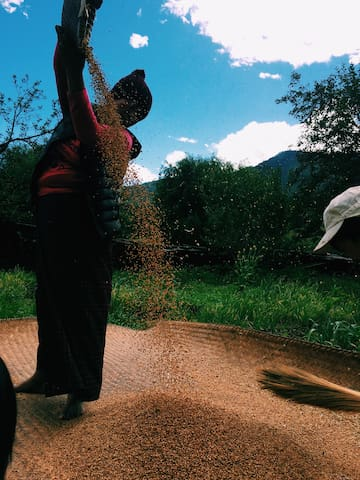 If you visit during the harvest season: you will experience the unique rich and astonishing cultures.