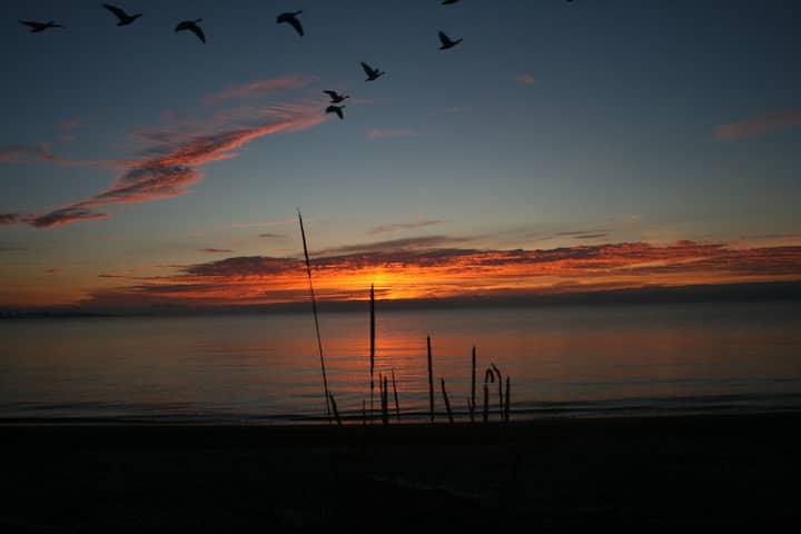The Sea Nest - Your Ocean Retreat